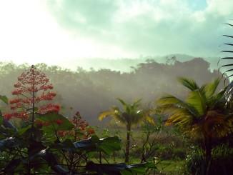 Guarana - zázračná semena s mnoha účinky!
