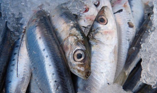Čerstvé sardinky taktéž neuškodí.