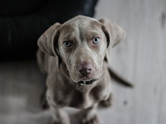 Pes jako přítel a terapeut