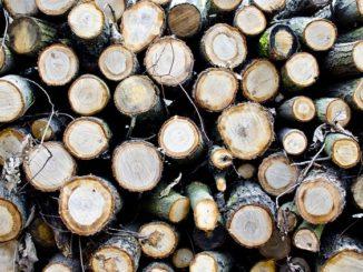 Bojujeme se škůdcem dřeva: Červotoč