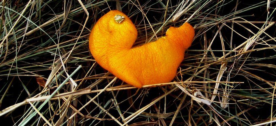 Pomerančová kůra – kde všude může být účinná?