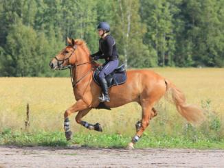 Jak správně vyčistit jezdeckou helmu na koně?